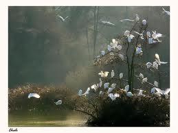 L'arbre aux oiseaux blancs  dans réflexion telechargement-2